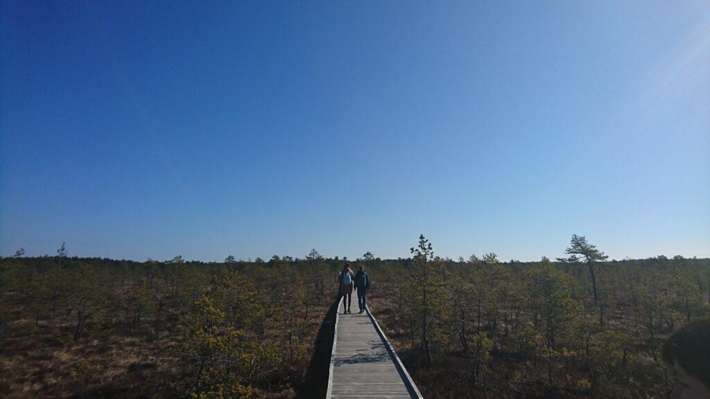 Viru Bogwalk in Lahemaa National Park