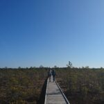 Lahemaa National Park Viru Bog