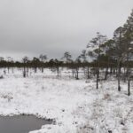 Private Day-Trip in Tallinn and Lahemaa National Park 9